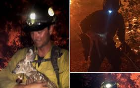 Arizona Firefighters Killed Video by Arizona Firefighters Save Baby Deer From Raging Fire Deseret News