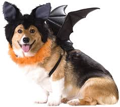 amazon com animal planet bat dog costume small pet costumes