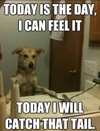 Dog Funny Meme - 45 funny dog memes dog memes captions and memes