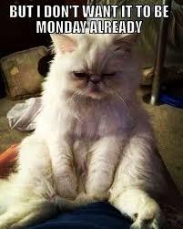 Monday Cat Meme - 60 monday memes funny monday work memes