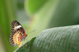 butterfly house displays visit horniman museum and gardens