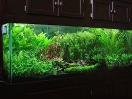 Diy Aquascape 69 Best Fishtanks Images On Pinterest Aquascaping Aquarium