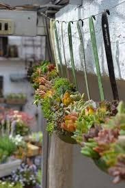 290 best succulent garden images on pinterest succulents garden