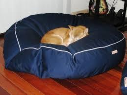 Medium Sized Dog Beds Photo Gallery Medium Dogs