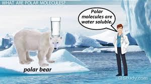 polar molecule definition u0026 examples video u0026 lesson transcript