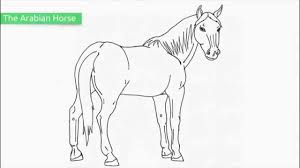25 free printable horse coloring pages
