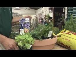 beginners vegetable gardening herb garden basics youtube