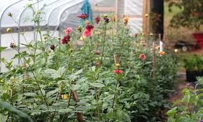 farm fresh flowers flower farm n fresh in philadelphia gardenista