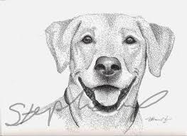 sketch drawing of a dog dog sketches funny cat dog pictures