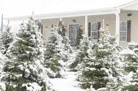 country christmas tree country christmas tree farm and gifts greenwood michigan