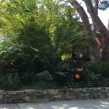 california native plants for the garden 12 great plants made for the shade pacific nurseries