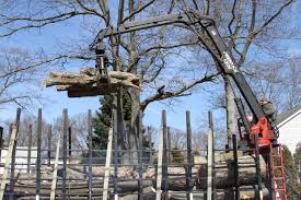 cheap s tree service cherry picker loading cut trees cheap