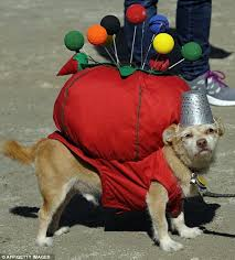 Funny Dog Halloween Costumes 54 Pets Dress Images Animals Pet Costumes