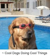 Cool Dog Meme - cool dogs doing cool things dogs meme on me me