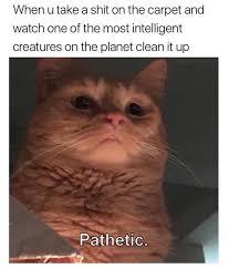 Hen Meme - dopl3r com memes hen u take a shit on the carpet and watch one