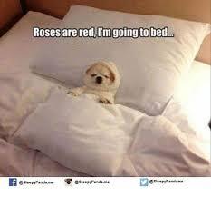 Sleepy Memes - 25 best memes about sleepy sleepy memes