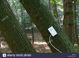 electrical outlet on tree in forest stock photo royalty free