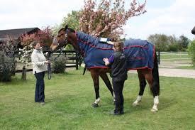 gates equestrian vip horse care cases