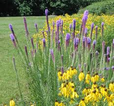 native plants of oregon how to design a native plant garden dyck arboretum
