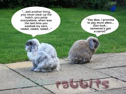 Kims Rabbit Hutch 30 Best Different Breeds Of Rabbits Images On Pinterest Raising