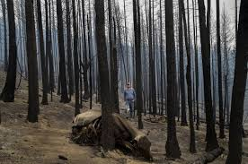 How Many Wildfires In Washington State by Ranchers Face Loss Of Livestock Livelihoods In Washington Fires