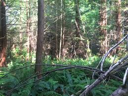 cabin discovered in arcata community forest mad river union