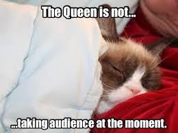 Funny Grumpy Cat Meme - 215 best grumpy cat humor images on pinterest funny pics grumpy