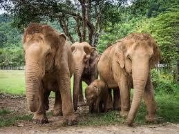 25 random observations about thai elephants