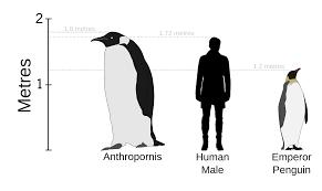 anthropornis wikipedia