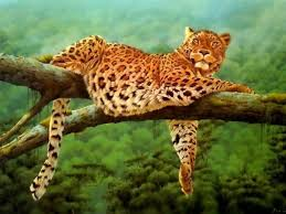 affectionate cheetahs wallpapers 53 best hd big cats wallpapers images on pinterest all quotes