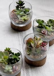 terrarium table succulent terrariums hgtv