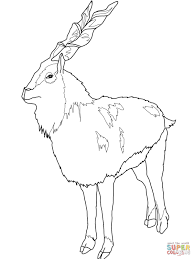 markhor coloring page free printable coloring pages