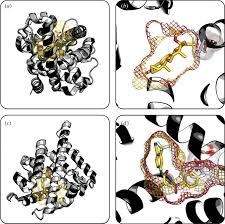 bioinformatics and variability in drug response a protein