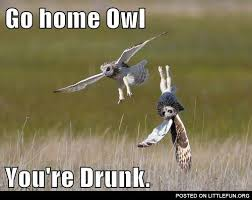 Funny Owl Meme - pin by ariel russell on yeahbsolutely pinterest owl meme and meme