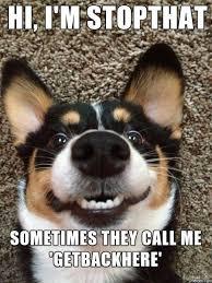 Funny Meme Dog - hi im stopthat funny dog meme