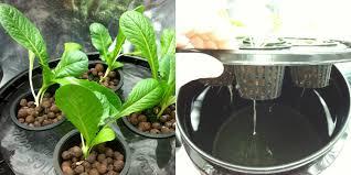 hydroponic vs soil gardening atlantis hydroponics blog