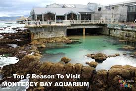 top 5 reasons to visit the monterey bay aquarium findingdoryevent