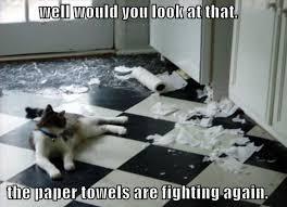 resume templates janitorial supervisor meme dog funny memes clean 358 best funny cats images on pinterest fluffy kittens fluffy
