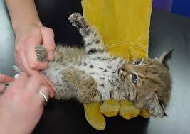California wild animals images Suisun wildlife rescue center jpg