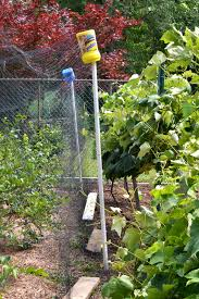 keep birds out of your berries u0026 six more tips for growing food