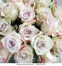 silver roses silver on wooden surface stock photo 589331150