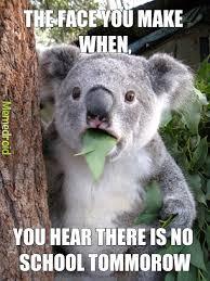 No School Meme - koala no school meme by cgbkts memedroid