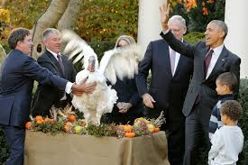 president obama read the transcript from the turkey pardon time