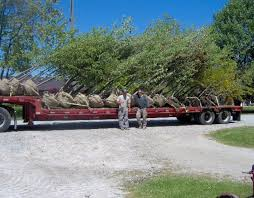tree delivery delivery maidstone tree farm