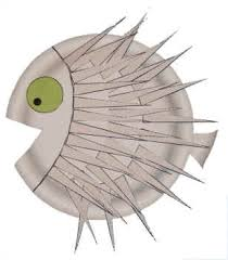 pufferfish paper plate craft