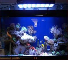 Aquarium Decorations Cheap Unique Aquarium Decorations Home Design Ideas