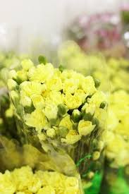 Carnations In Bulk Wholesale Flowers And Wedding Flowers In Bulk The Grower U0027s Box