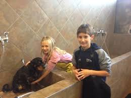 Creature Comforts Grooming 136 Best Dog Washing Images On Pinterest Dog Wash Grooming Shop