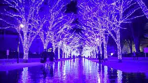 zelkova trees lit up to form glowing blue grotto in shibuya