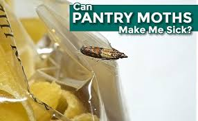 can pantry moths make me sick